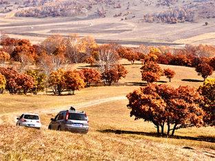 秋色盎然 穿越乌兰布统大草原