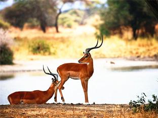 动物世界 东非之旅新奇且兴奋