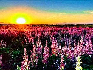 牧歌昭苏 欣赏绝美的天马故乡