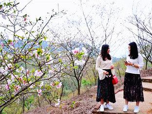 初春踏青 到那桃花盛开的地方