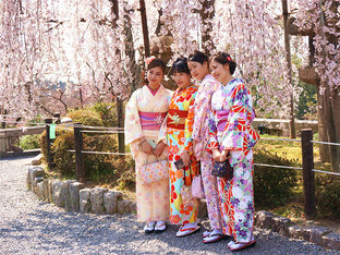 日本樱花季的自由行