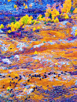 热鲁科--隐藏的仙境