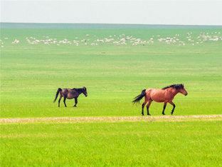 避开大路走小路 内蒙草原之旅