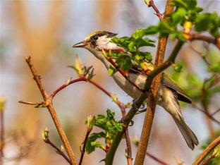 北美野生保护区看鸟