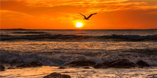 寻找温暖 哥斯达黎加看天堂鸟