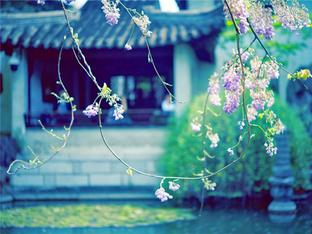 看紫藤花开了 最美人间四月天