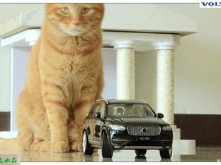 响应国家号召 宅家拍车模拍猫猫发帖