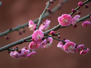 花儿献给有情人 在春节里放松一下心情