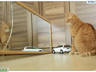 响应号召呆在家 拍车模XC60和俩小猫