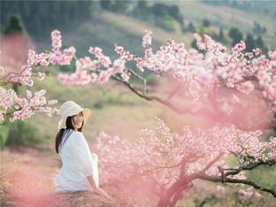 春天如期而至 成都龙泉山上桃花盛放