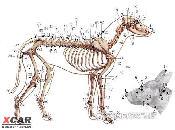 今天找到了一个治疗犬瘟后遗症的方法,大家共享