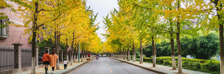 【年终盛典】水乡小镇和都市公园之旅:芦墟、金泽、西塘和嘉兴
